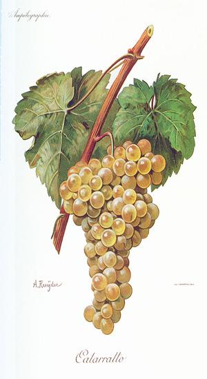 Sicilia Catarratto